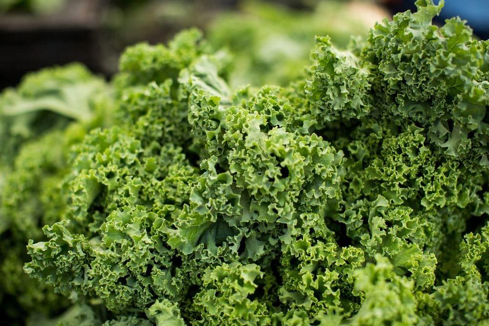 Kale verdura
