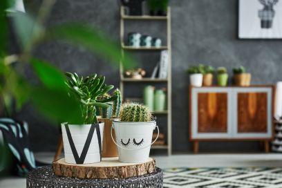 Come scegliere la pianta d'appartamento giusta in base al proprio segno zodiacale