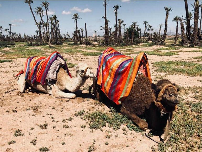 marrakech cammelli