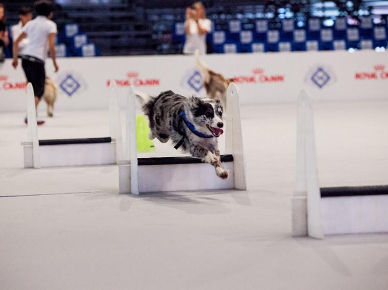 settimana cane