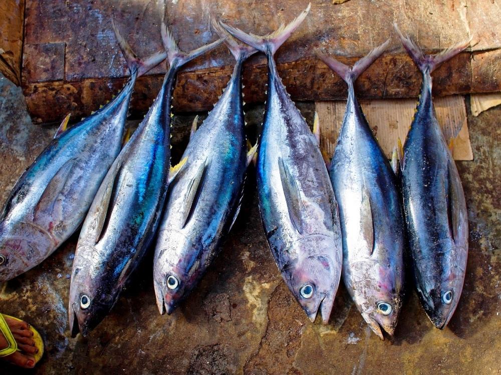 mal di testa pesce