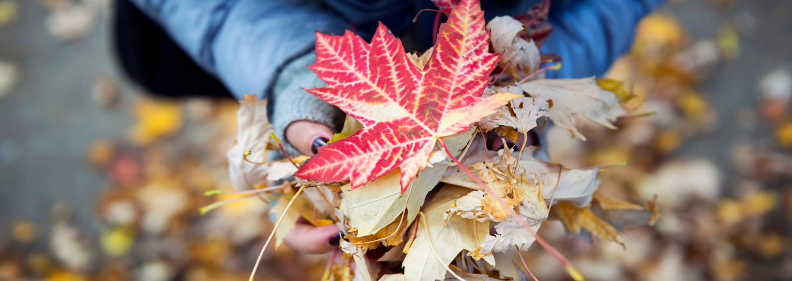 autunno canada immagine hero grande