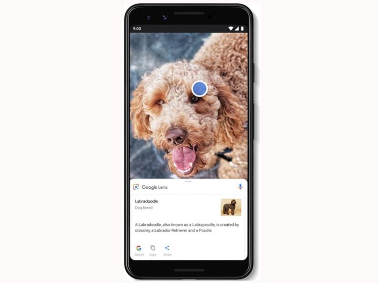 Google Lens_animali