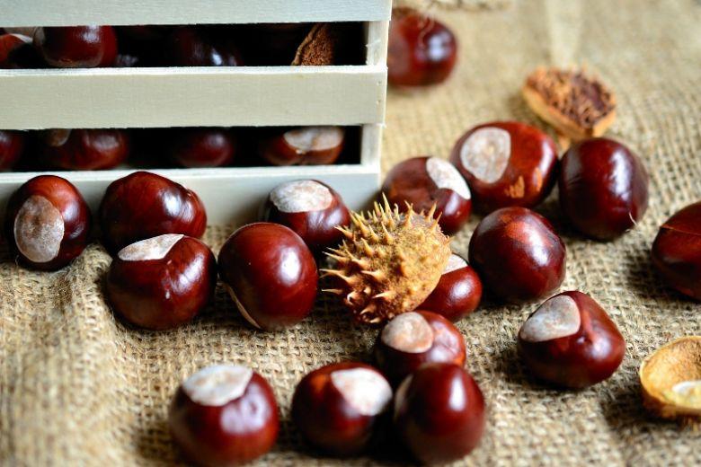 Castagne: proprietà, benefici e controindicazioni dello snack dell'autunno