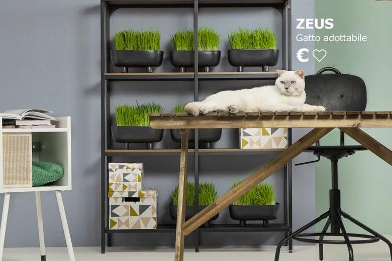 IKEA Italia lancia una campagna di adozione insieme ad ENPA