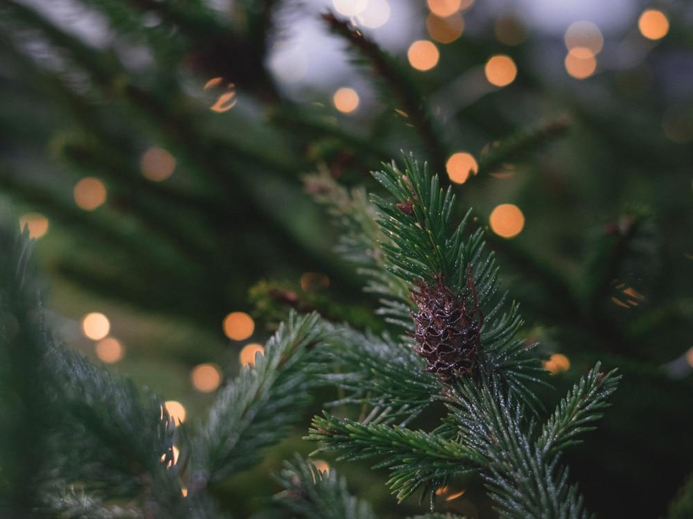 profumi natalizi