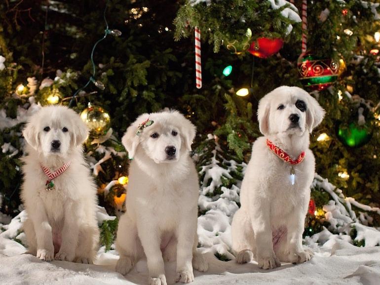 Cani magia del Natale