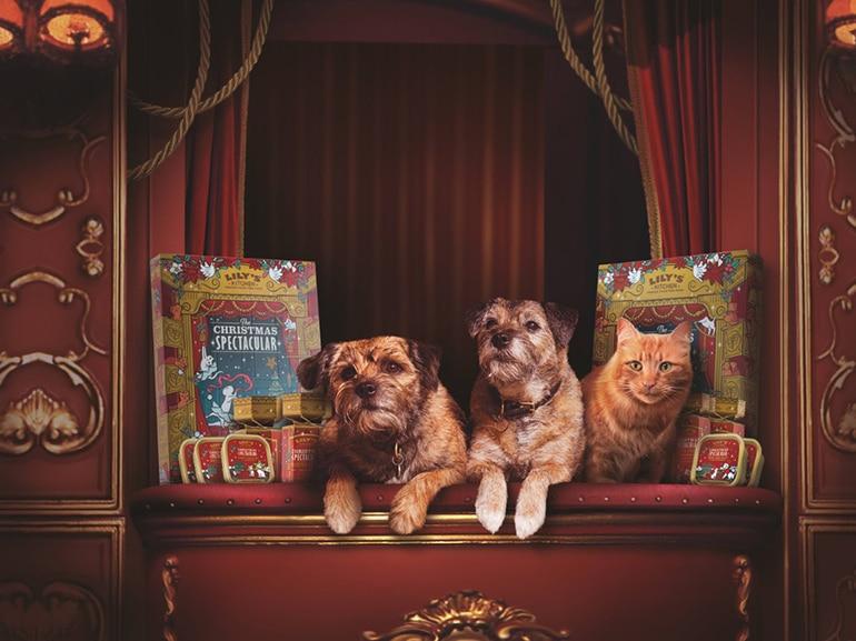 calendario avvento cane gatto