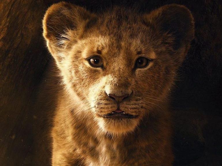 19 il re leone