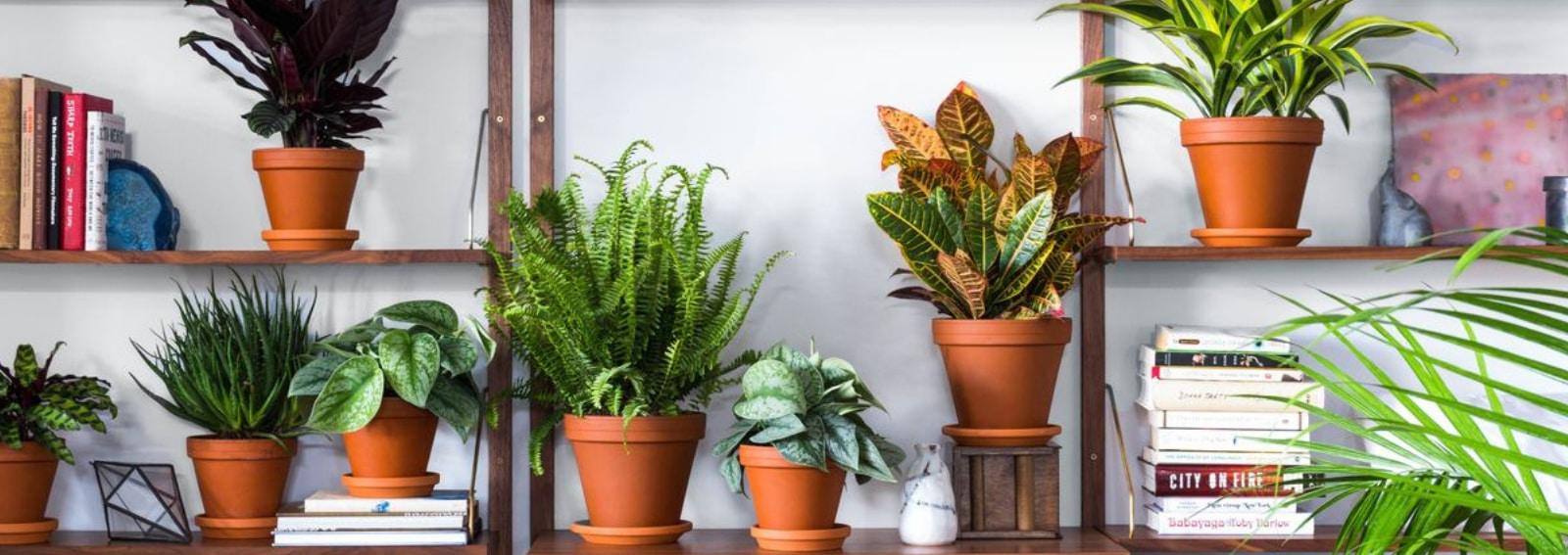 Piante Eleganti Da Appartamento piante da appartamento: le 8 preferite dai designer per