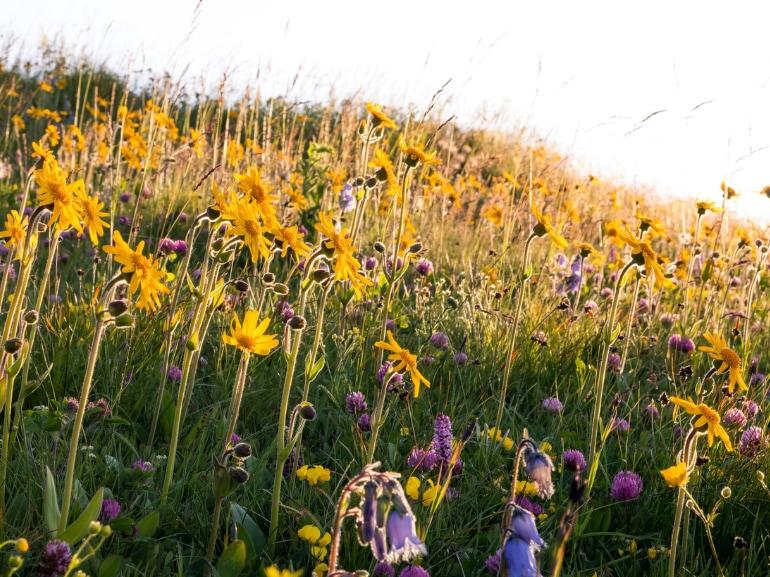 Primavera in Austria prato fiorito lago Millstaettersee Carinzia (c) Oesterreich Werbung_Michael-Stabentheiner MOBILE