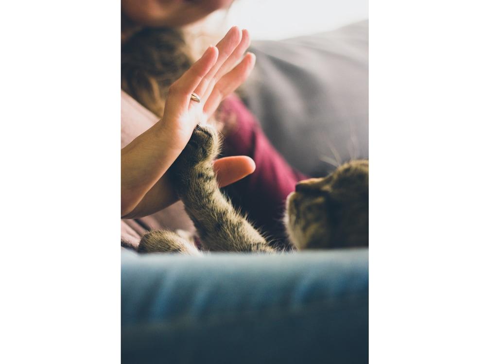 03-gatto-zampa-ragazza-pet-therapy