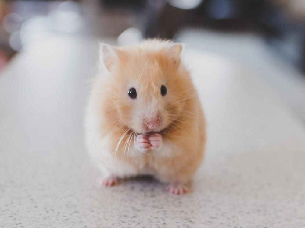 04-criceto-pet-therapy