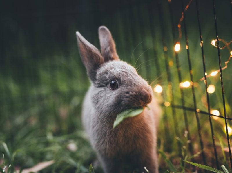 05-coniglio-mangia-foglia-pet-therapy