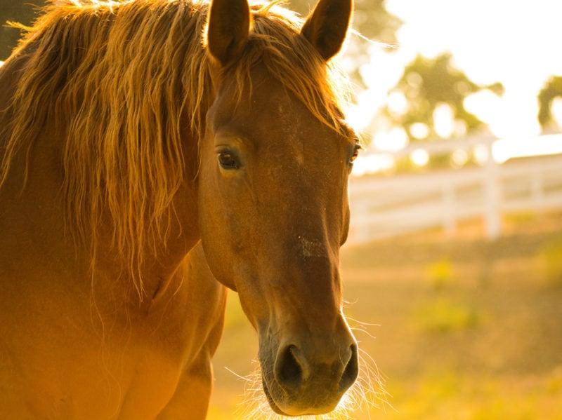 06-cavallo-pet-therapy