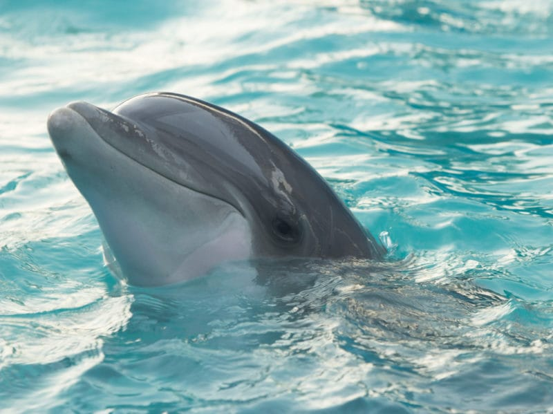 09-delfino-mare-pet-therapy