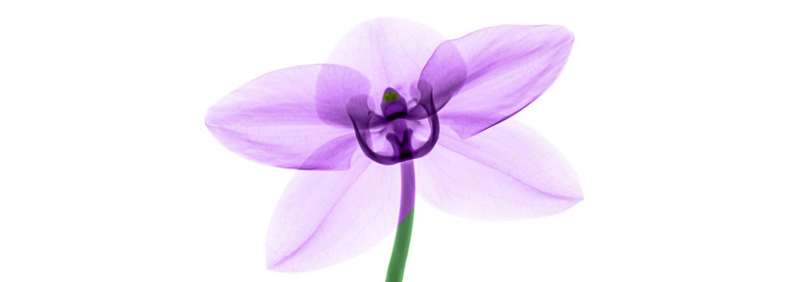 2DESKTOP_Profumi-fiori-primavera