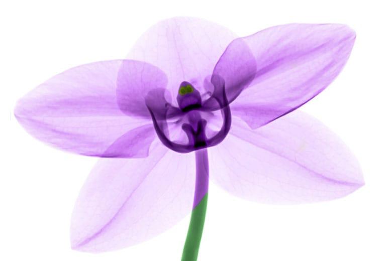 Profumi romantici dalle note fiorite