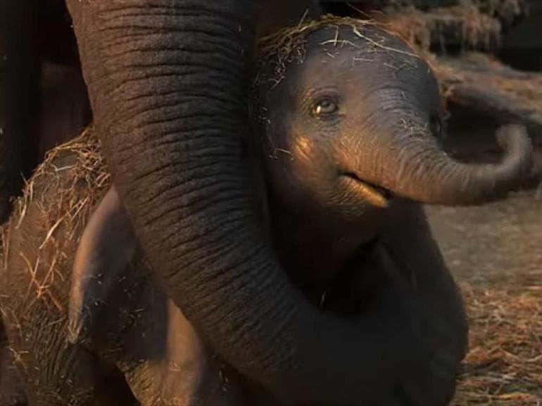 Dumbo Mamma