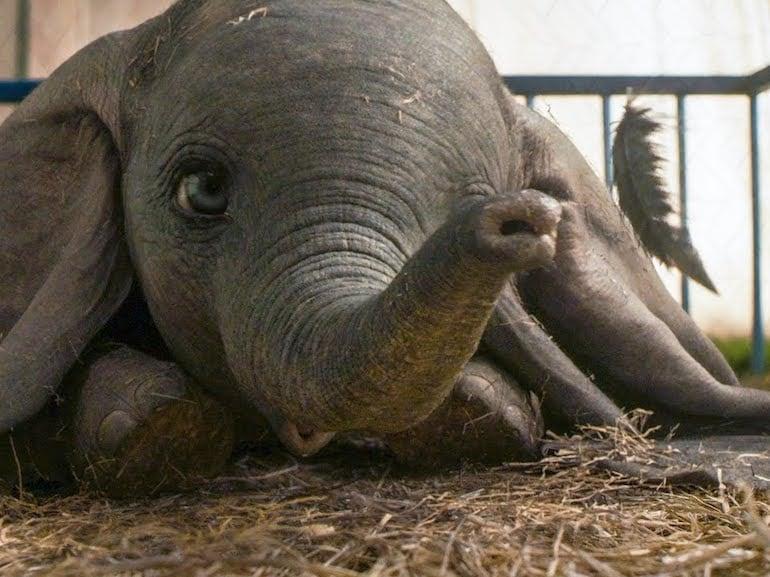 Dumbo caduto