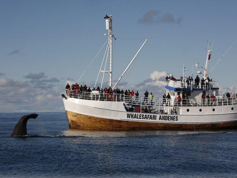 whalesafari norvegia
