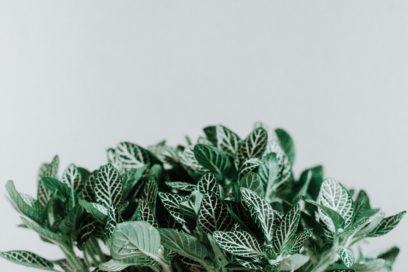 Profumi freschi e aromatici: le fragranze con note di menta
