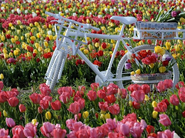 tulipark roma Credits Alessandra Finiti