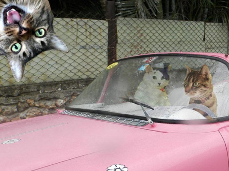 04-crociera-gatti