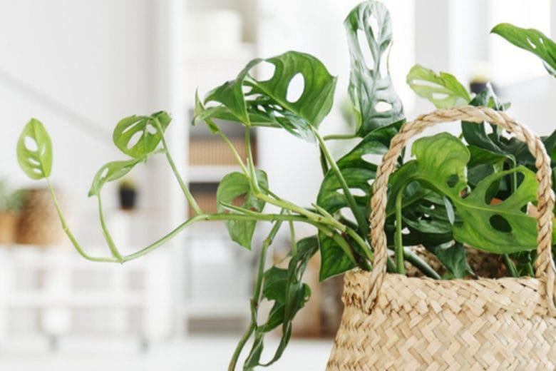 7 piante da interni per rendere la casa felice… e decisamente chic
