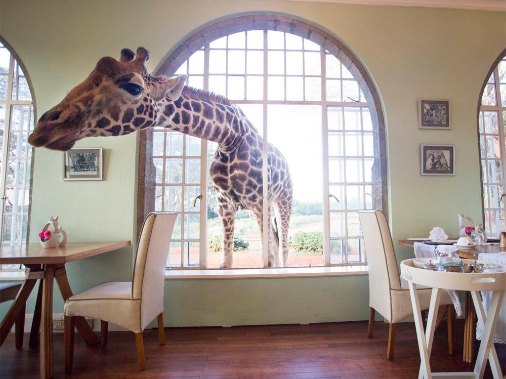 09-giraffe-manor