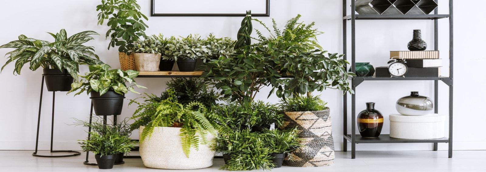 6 piante da interno per profumare la casa - Grazia.it