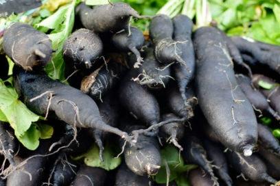 Cosa sapere sulla scorzonera, la super radice che aiuta a dimagrire e combatte la cellulite
