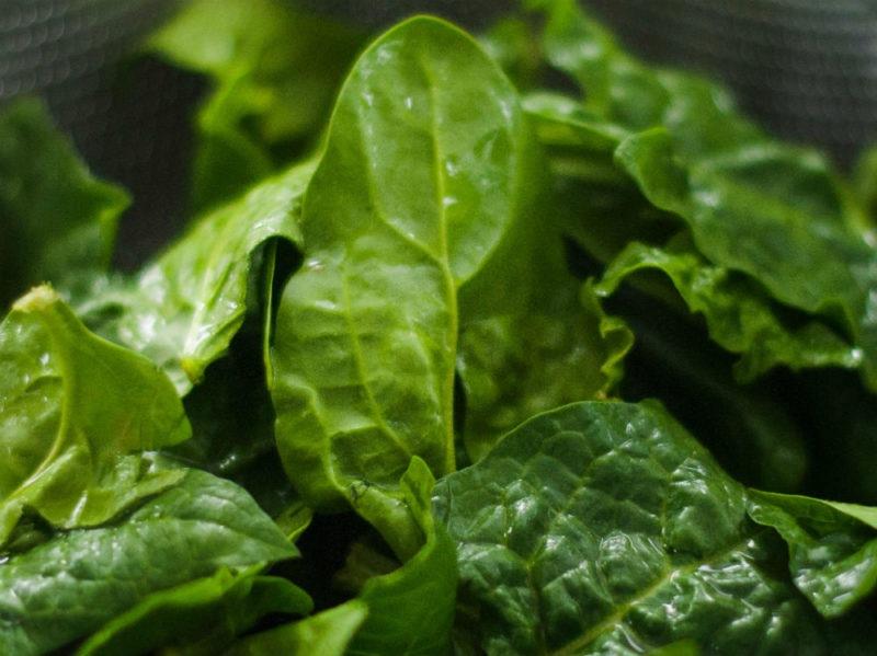 Spinaci verdura