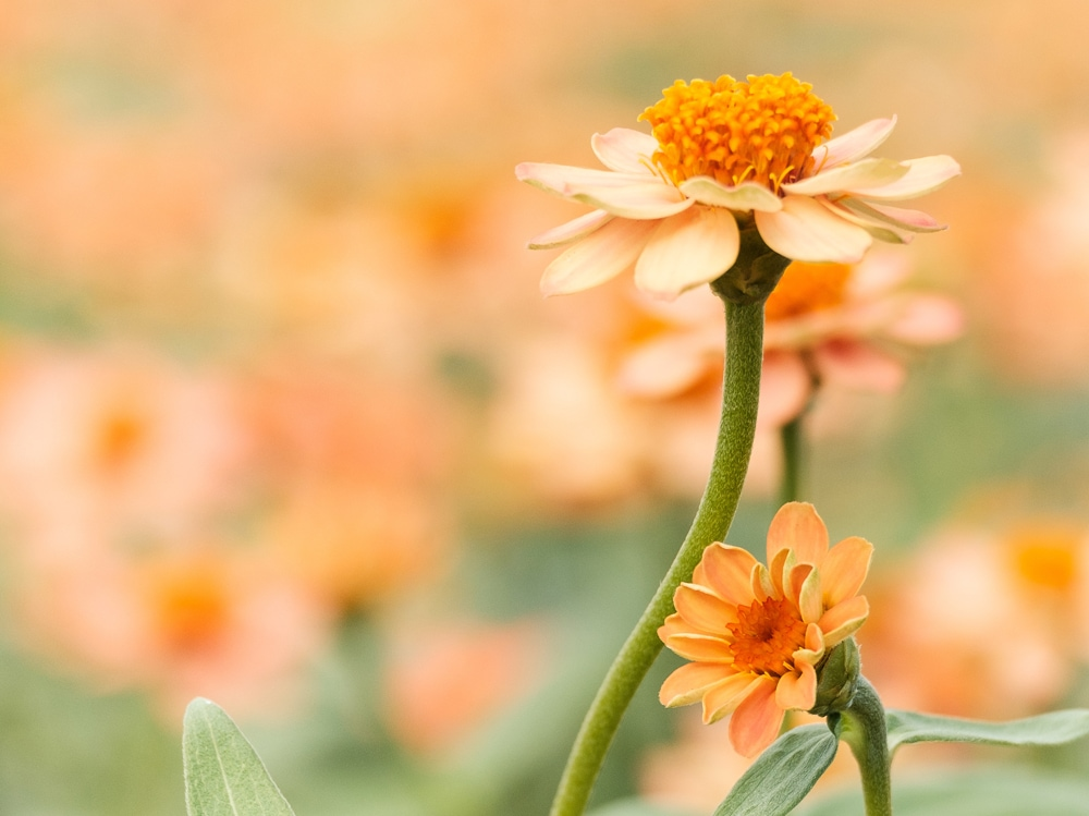 background-beautiful-blooming-1028705
