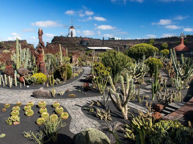 lanzarote-jardin-de-cactus