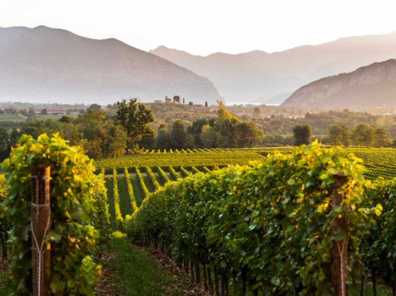 Franciacorta itinerari gusto vino natura storia arte Fetival Franciacorta in Cantina 1
