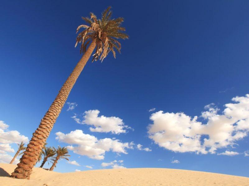 Tunisia vacanze viaggio mare storia arte cultura