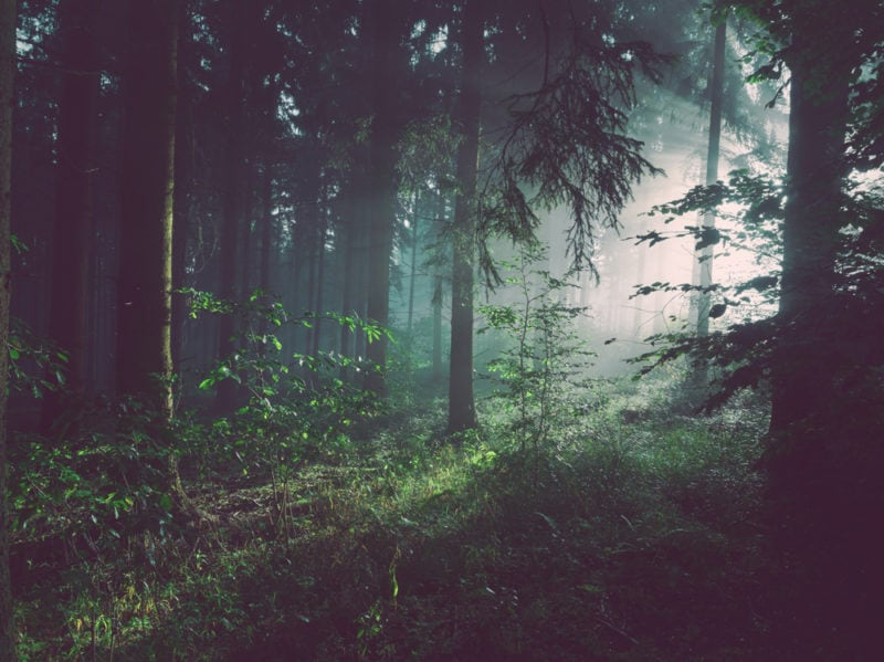 04-foresta-alberi