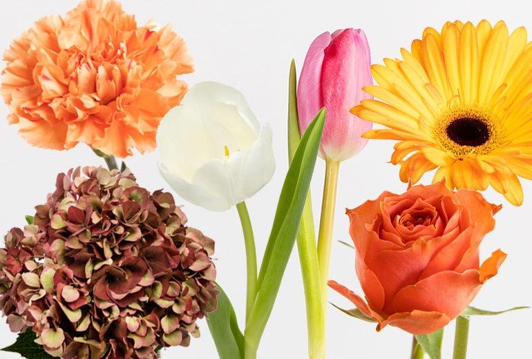 Significato dei fiori: prima di regalare quel mazzo leggete qui