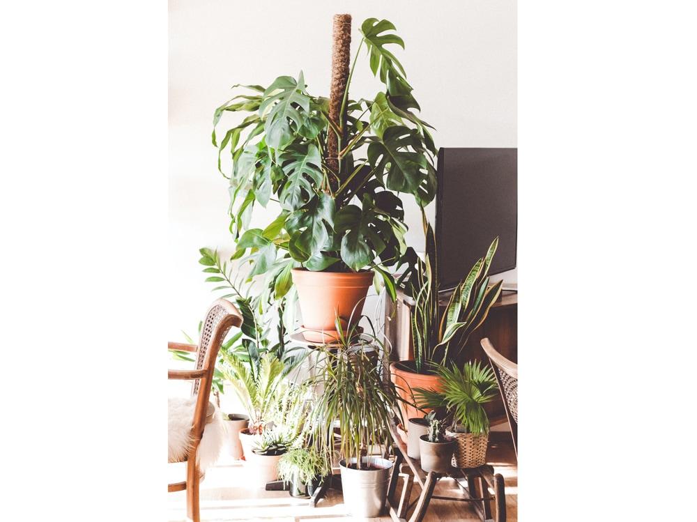 13-piante