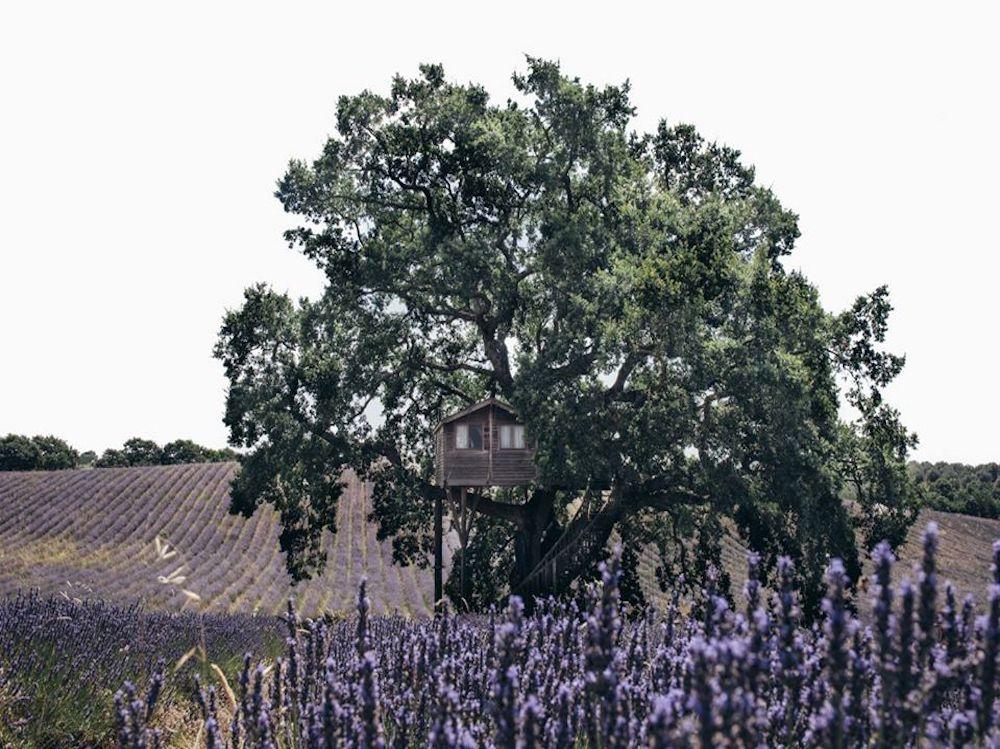 La Piantata, casa sull'albero, Lazio