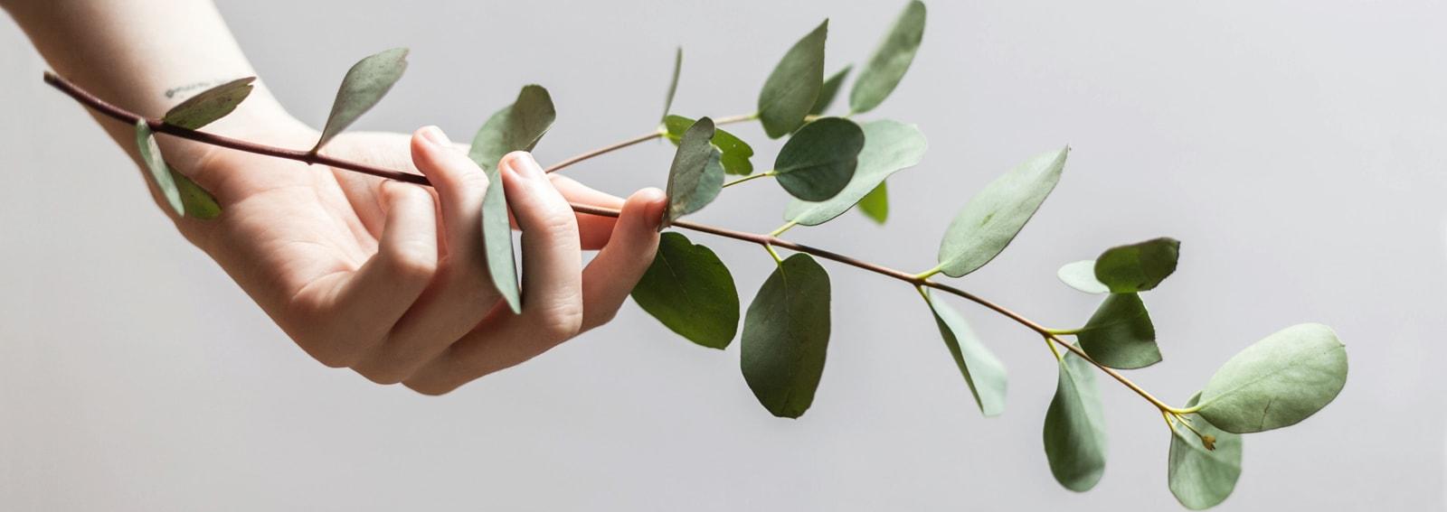 visore-abitudini-greenDESK