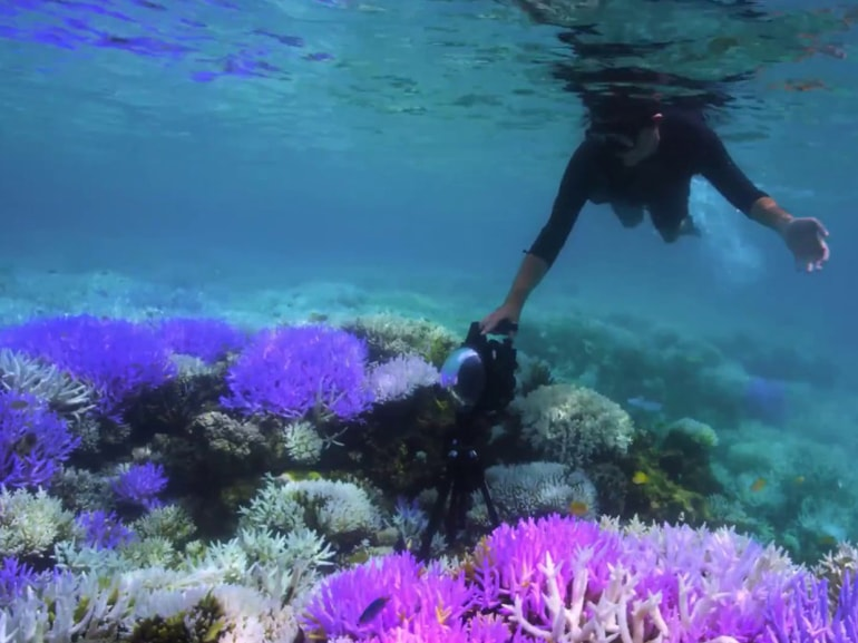 04 chasing coral