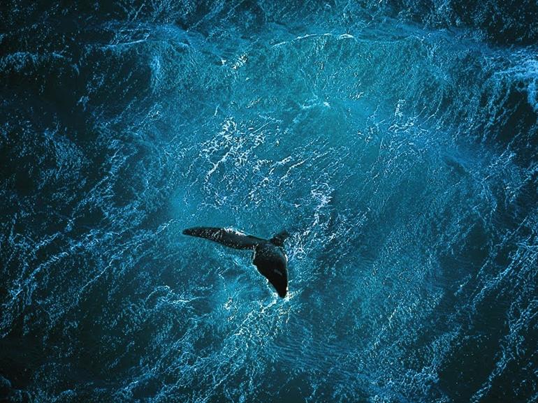 08 planet ocean