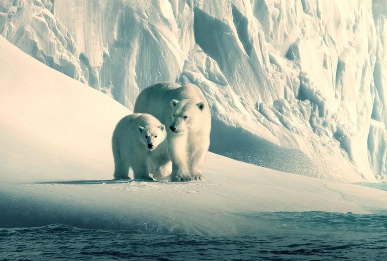 I più bei film e documentari sulla natura e l'ambiente da vedere assolutamente