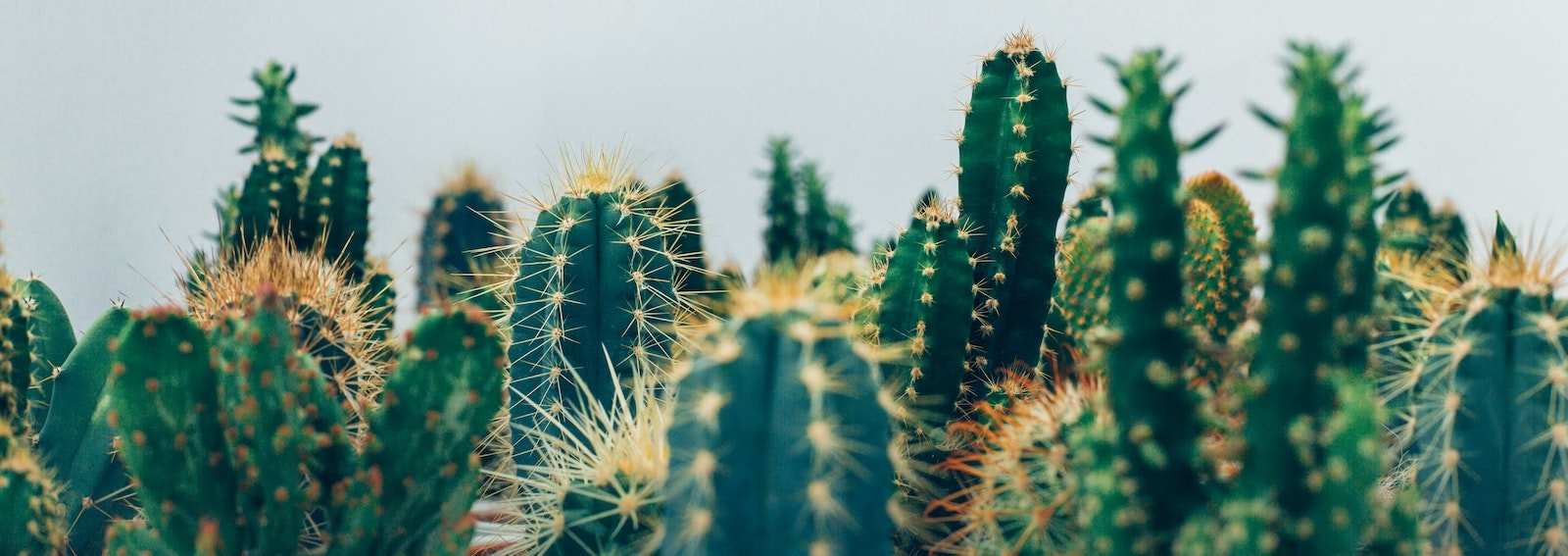 cactus foto hero grande