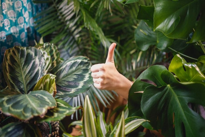 4 trucchi per far sopravvivere le piante di casa quando si va in vacanza
