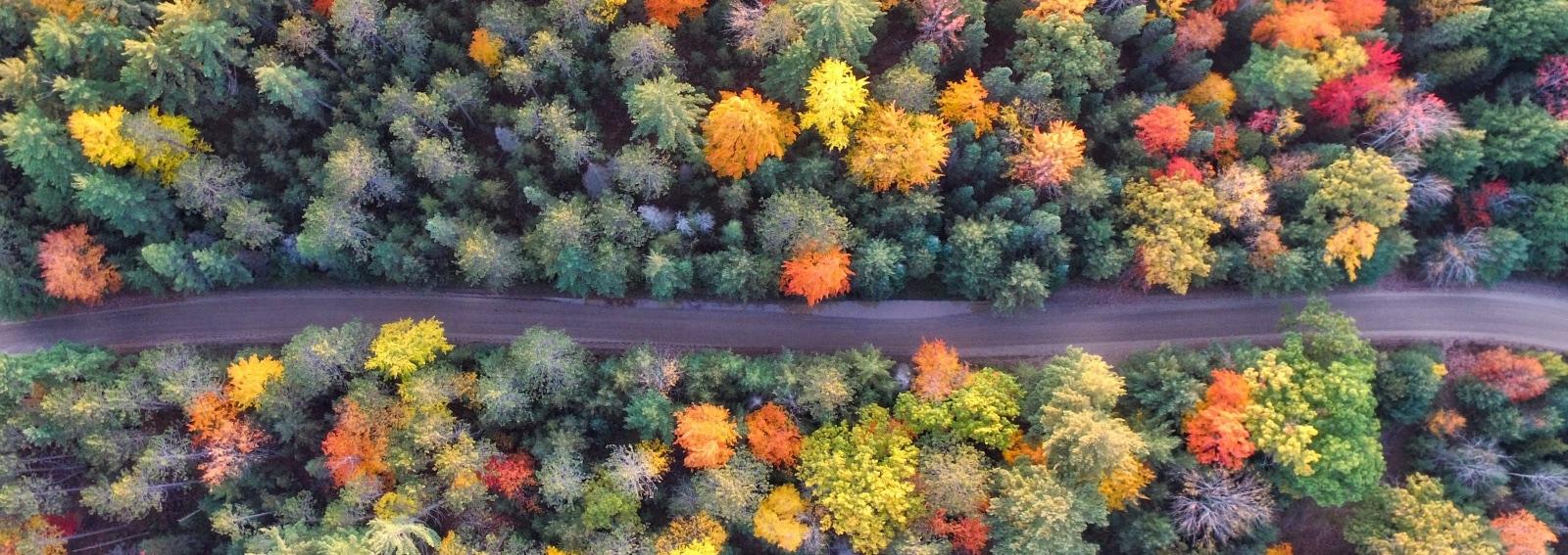 aaron-burden-Qy-autunno-unsplash