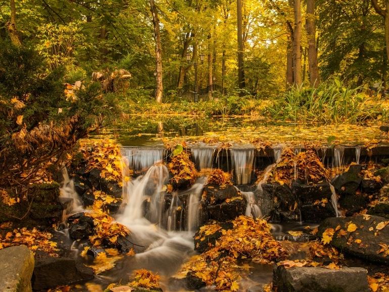 dawid-zawila-autunno-unsplash
