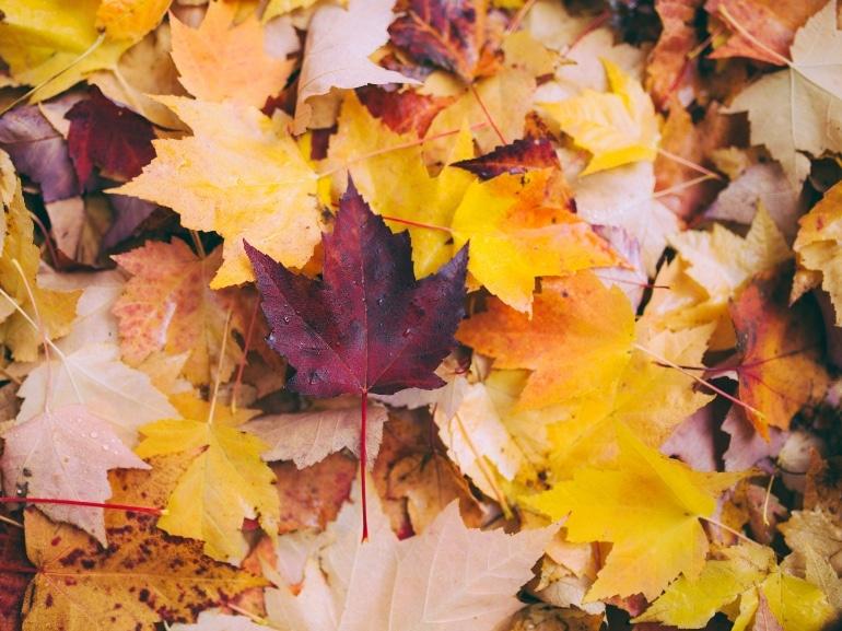 greg-shield-foliage-unsplash